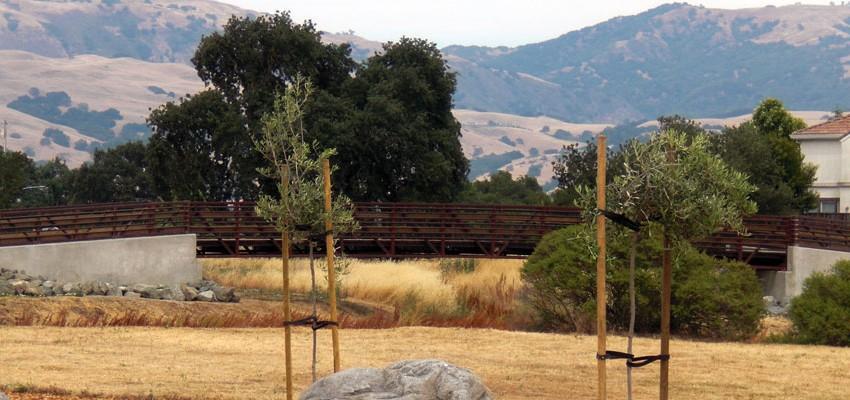 Llagas Creek Trail 5